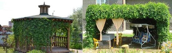 Красивые виноградные беседки и навесы, фото примеры - Строительный сайт
